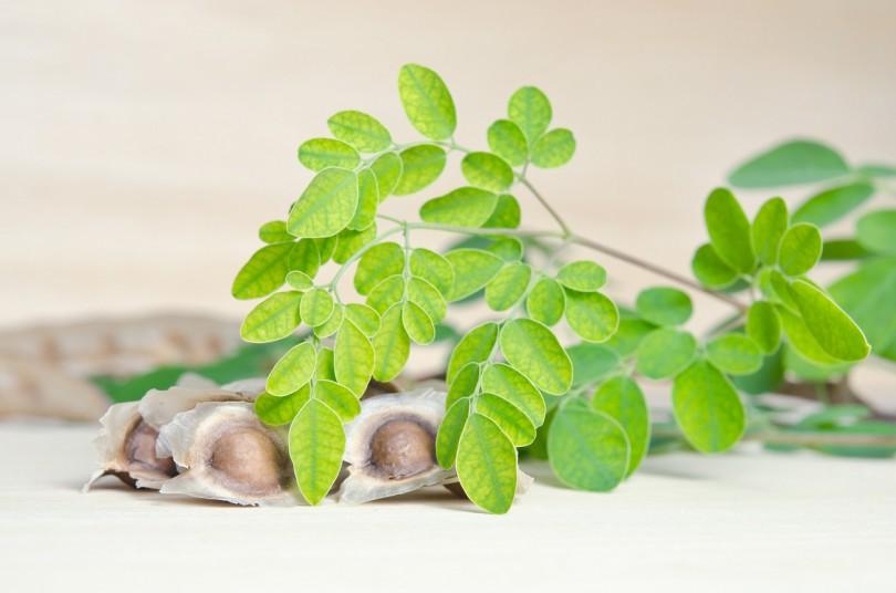 Moringa-Pflanze | (c) Bigstockphoto ID: 134445437 | Suradech Kongkiatpaiboon
