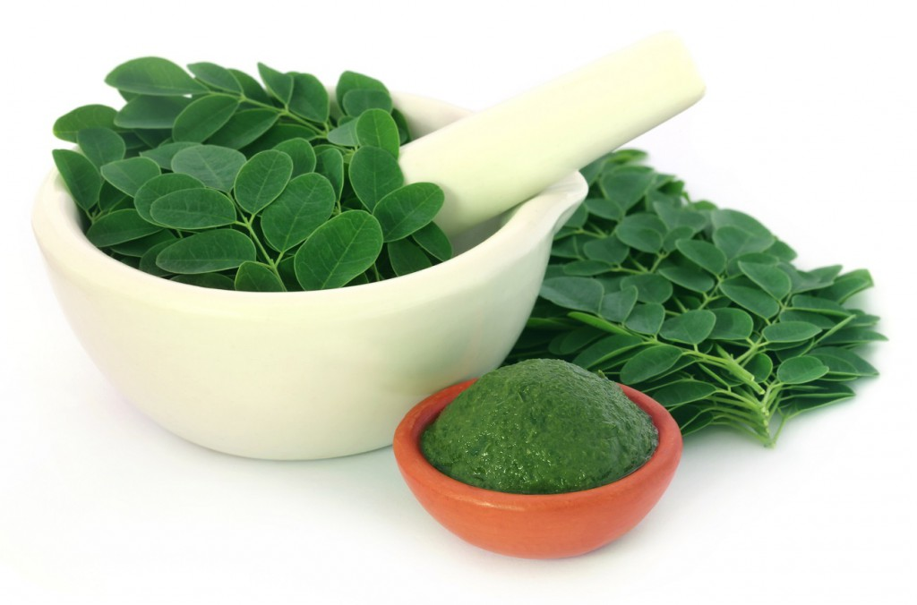 Die Moringa-Blätter enthalten wichtige Nährstoffe   (c) Bigstockphoto ID: 112512422   A K Choudhury