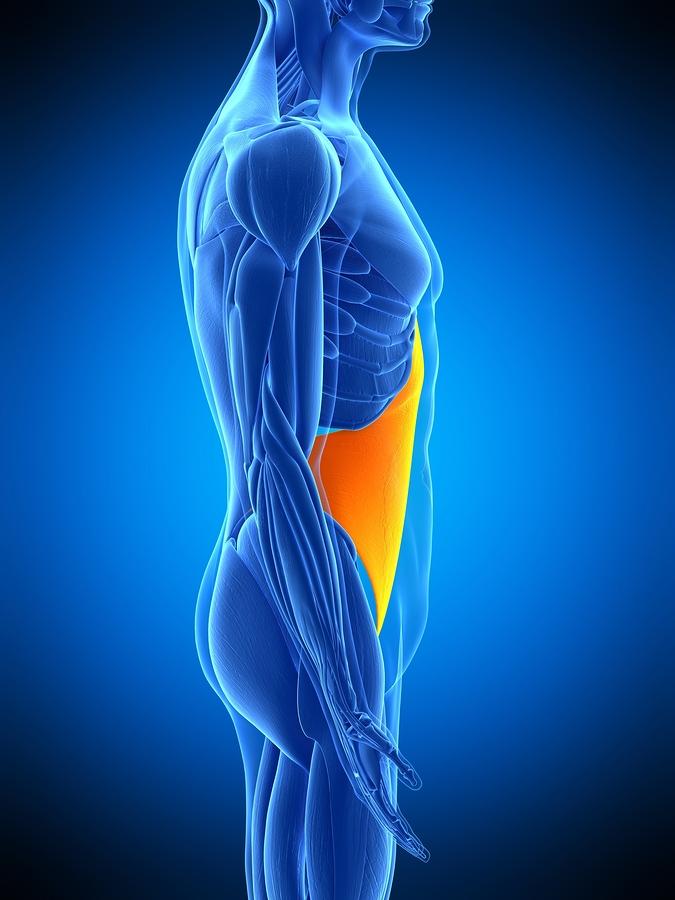 Transversus Abdominis - Ein Teil der seitlichen Bauchmuskeln