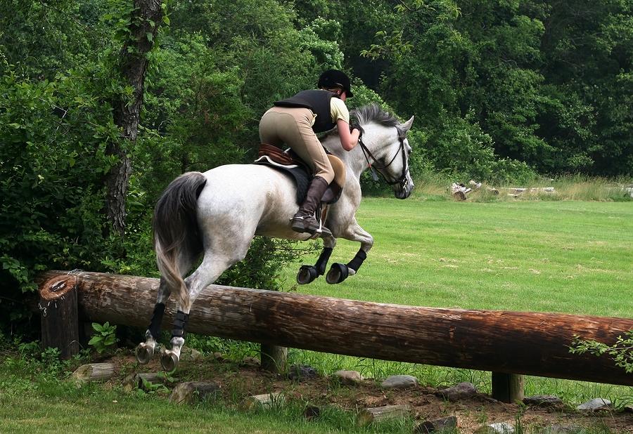 Grünlippenmuschel für Pferde und Katzen  I ©Bigstockphoto.com: ID: 617559/photojoy