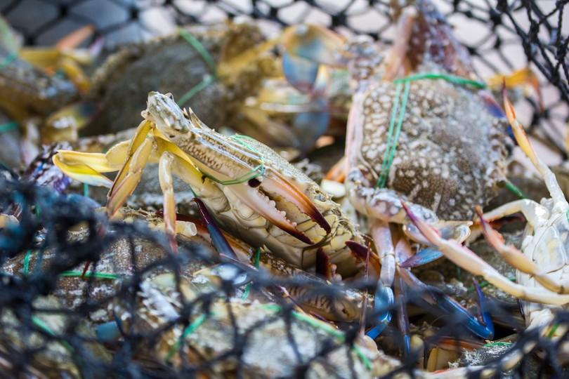Krill-Krebse als Krillöllieferant   I  ©Bigstockphoto.com: ID: 200169640/ImpakPro